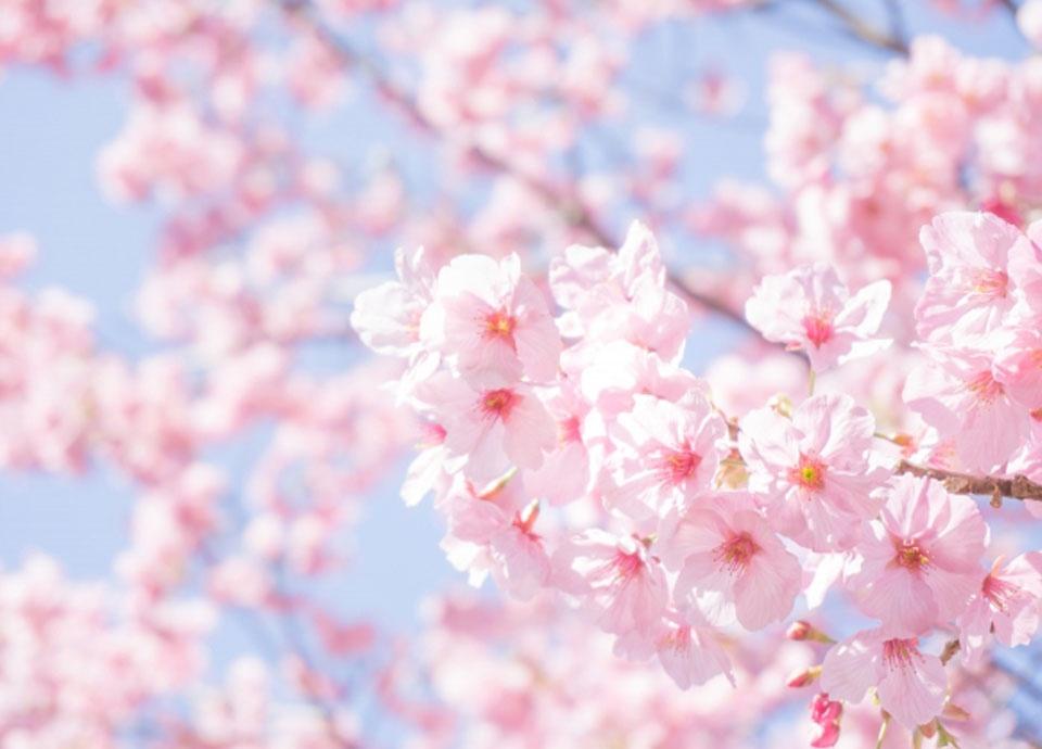 春のお祝いフェア