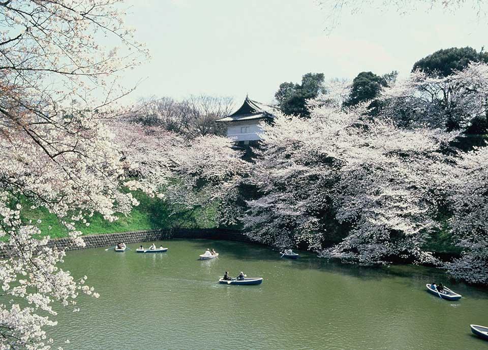 【ウォーキングマップ付き】春散歩プラン